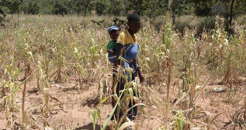 ジンバブエ 飢餓の瀬戸際で