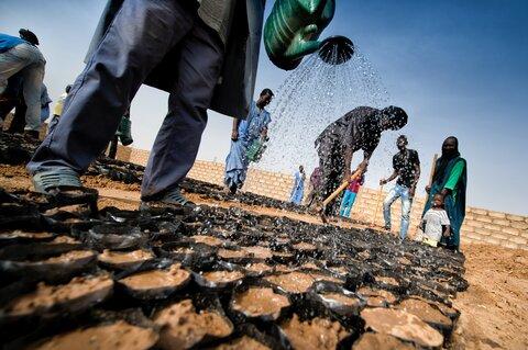 襲い来る砂漠化、懸命の緑化活動