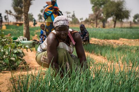 ハンガー・パンデミック : 食料安全保障報告書が国連WFPの最悪の懸念を裏付ける